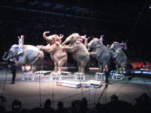 elefantes-ringling